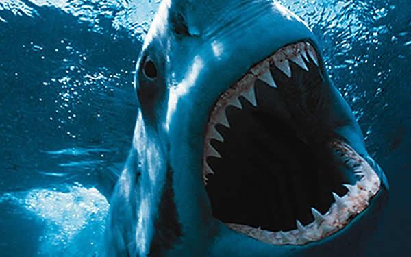 Нападение акулы в Приморском крае