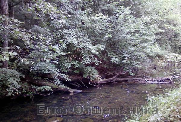 Горные реки Приморья