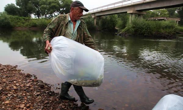 Зарыбление реки Арсеньевка