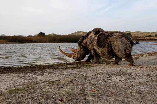 Шерстистый носорог в Приморье