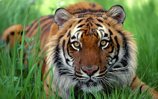 Реабилитационный центр для тигров