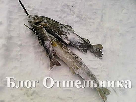 смотреть приколы на зимней рыбалке