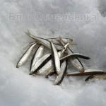 Рыбалка в бухте Ольга