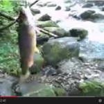 Август 2013, рыбалка на Еламовском ключе